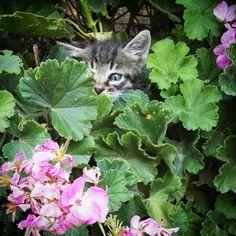 Gattino tra i fiori