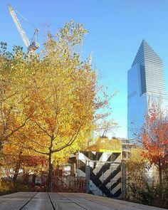 Urban nature therapy #highlinepark #fall #autumn #NYC #park #NewYork #trees #skyscraper #crane #construction