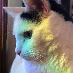 Happy International Cat Day! #internationalcatday #cats_of_instagram #cats #catsruleeverythingaroundme