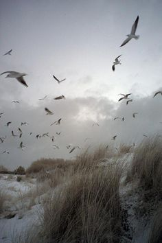 "Sea Gulls in flight over dunes ""Winter Dunes"" ~ David Firth, Photo-Graphics. David Firth, Beautiful World, Beautiful Places, Am Meer, Belle Photo, Seaside, Surfing, Scenery, Photography"