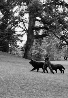 america-runs-on-kennedy - Posts tagged bobby kennedy Ethel Kennedy, Robert Kennedy, Hickory Hills, Greatest Presidents, Newfoundland, Unique Photo, World History, Virginia, Dogs