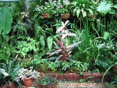 Mid-Winter Downunder - Shadehouse Garden : Grows on You Backyard Ideas, Garden Ideas, Shade House, Tropical Gardens, Garden Pictures, Tropical Paradise, Garden Plants, Palm Trees, Outdoors