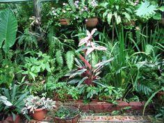 Shadehouse Garden