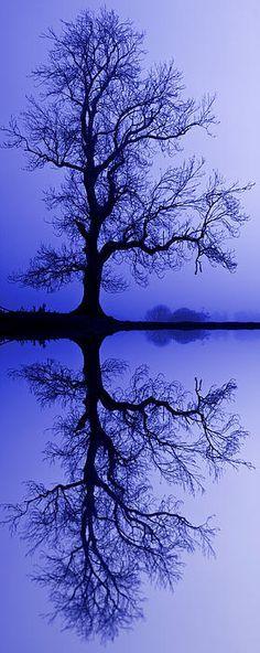 Tree Skeleton Reflection | By David Pringle