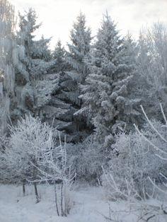 Žiema1