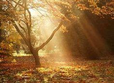 Obraz znaleziony dla: krajobrazy jesienny polski