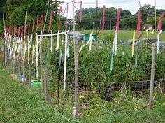 Blog of an Ancient Gardener: Deer Country 5: Deer & Veggie Gardens