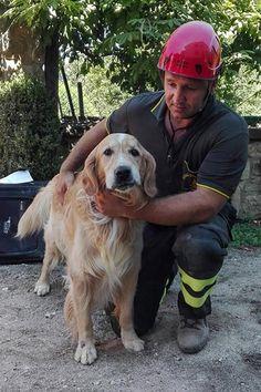 Romeo el perro que sobrevivió nueve días bajo las ruinas del terremoto de Italia