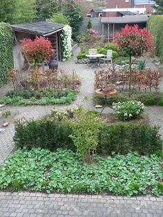 dwarshagen om de tuin breder te laten lijken, meer bestrating van hergebruikte stenen. De 2 Photinia fraseri 'red Robin' op stam loopt uit met rode bladeren.