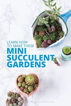 These mini succulent gardens are so adorable and so easy to make! I want all of them!