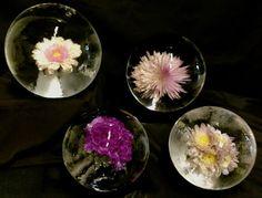    Flower Ice Spheres    http://sphericool.net/    #IceBallMaker #Sphericool #IceMold #MixedDrinks #IceBallMold #Whiskey #Cocktails #IcedCoffee #Ice #IceBall #SphereIce #IceSphere #IcedDrinks #OnTheRocks #Amazon