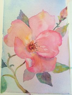 Wild rose watercolor