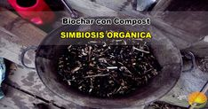 Biochar con compost orgánico probablemente es la mejor manera de utilizar biocarbon o carbón vegetal como abono orgánico o ecológico. Compost, How To Dry Basil, Farmer, Herbs, Food, Organic Fertilizer, Homemade, Essen, Farmers