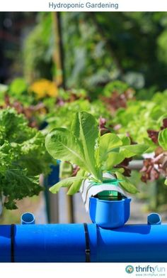 Build a nft hydroponic system youtube setup pinterest this is a guide about hydroponic gardening this gardening method conserves water resources does solutioingenieria Image collections