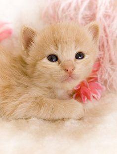 #Cats  #Cat  #Kittens  #Kitten  #Kitty  #Pets  #Pet  #Meow  #Moe  #CuteCats  #CuteCat #CuteKittens #CuteKitten #MeowMoe      awww  ...   https://www.meowmoe.com/45042/