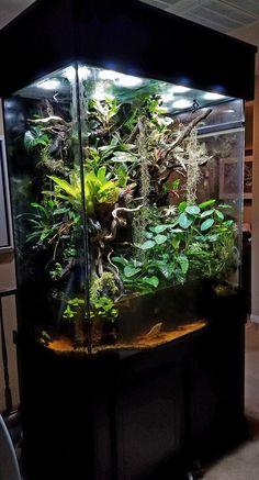 Aquarium Garden, Aquarium Landscape, Glass Aquarium, Aquarium Design, Planted Aquarium, Aquarium Fish, Aquarium Ideas, Terrariums Gecko, Water Terrarium