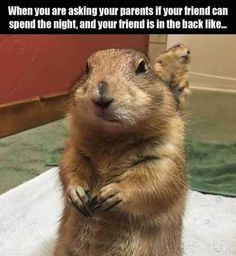 random animal memes to give you your LOL fix - give to you . 24 random animal memes to give you your LOL fix - give to you random animal memes to give you your LOL fix - give to you . Funny Animal Memes, Funny Relatable Memes, Funny Posts, Funny Animals, Very Funny Pictures, Funny Animal Pictures, Funny Cute, Hilarious, Lol