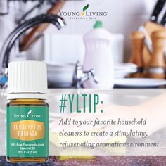 Young Living is the World Leader in Essential Oils. Young Living Essential Oils (YLEO) only incorporates the highest purity in grade for all of our health products. Essential Oils Cleaning, My Essential Oils, Eucalyptus Essential Oil, Young Living Essential Oils, Young Living Eucalyptus, Young Living Distributor, Yl Oils, Living Essentials, Young Living Oils