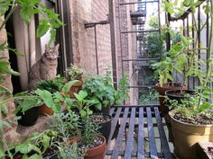 First things first: Make sure it's safe. | How To Grow Herbs And Veggies When You Live In A City Apartment