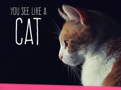 You see like a Cat! You have the most curious and wondrous eyes in the animal kingdom!  You are amazed by the beauty that surrounds you, and it is your wish to explore every aspect of it. | Which Animal Do You See Like?
