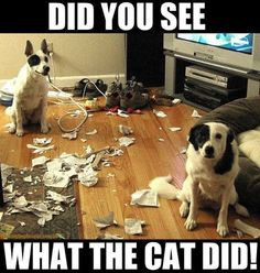 Did u see what the car did. Dog humour