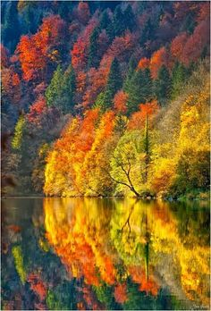 20 Scenic Autumn photos around the World - Science and Nature Fall Pictures, Fall Photos, Nature Pictures, Colorful Pictures, All Nature, Amazing Nature, Autumn Nature, Nature Water, Nature Tree