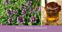 Mateřídouška úzkolistá Korn, Bird Feeders, Nostalgia, Herbs, Outdoor Decor, Gardening, Lawn And Garden, Herb, Horticulture