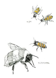 Bzzzzz bzzzzzzzz    bumle bee and bees drawn by Maartje van den Noort