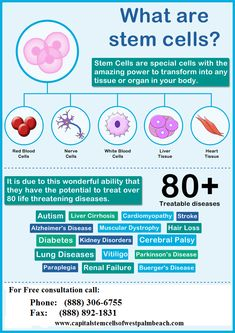 Get benefits of stem cells at stem cell Florida. foot and mouth disease remedies skin care What are stem cells and how can you get benefit from stem cells? Cord Blood Registry, What Is Stem, Cells And Tissues, Cord Blood Banking, Stem Cell Research, Cell Biology, Molecular Biology, Teaching Biology, Stem Cell Therapy