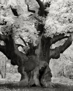 Photographer Beth Moon made a pilgrimage around the world to document the planet's most ancient trees.