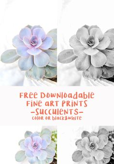 183 Best Free Printables • Botanical images in 2019 | DIY Wall Art