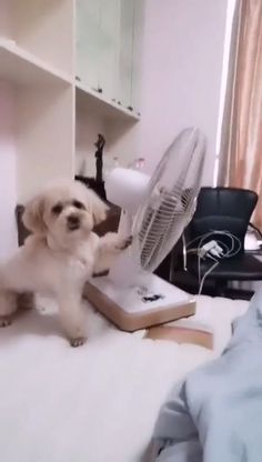 What a smart dog! 🐶🐶 - Ava Scott - What a smart dog! Cute Funny Dogs, Cute Funny Animals, Cute Baby Animals, Smart Animals, Cute Animal Videos, Funny Animal Pictures, Animal Antics, Funny Dog Videos, Baby Videos