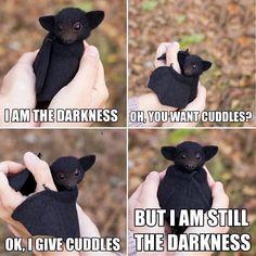Untitled Funny Animal Jokes, Cute Funny Animals, Funny Cute, Cute Dogs, Funny Pics, Funny Captions, Top Funny, Funny Animal Humor, Cute Baby Bats