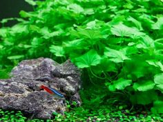 Are self cleaning fish tanks still fiction? | Blog | Practical Fishkeeping