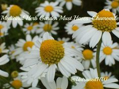 Must Have Herbs for Your Medicinal Herb Garden