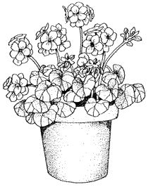 Drawings of geraniums drawing clip art misc ink for Gerri the geranium coloring page