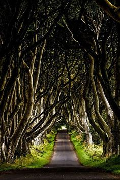 Dark Hedges, Ireland. Would LOVE to see this someday