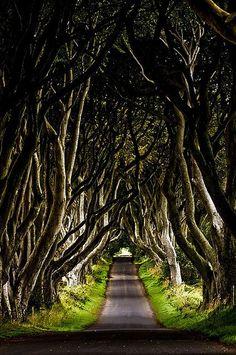 Irlanda, Nação Celta...Dark Hedges - Estrada De Árvores...Esta bela avenida de faias foi plantada pela família Stuart, no século XVIII. Foi concebida como uma característica paisagem atraente para impressionar os visitantes quando eles se aproximaram da entrada para a sua mansão georgiana, Gracehill House, que agora é um clube de golfe.