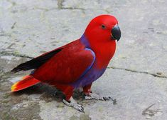 30 Most Colorful And Prettiest Pet Birds in The World800 x 571 | 101.5 KB | www.bukisa.com