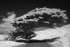 Infrared Photography - Google 検索