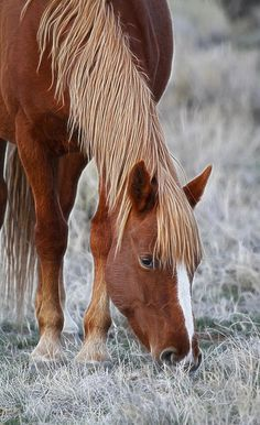☀Wild Horse Feeding by Steve McKinzie flaxen chestnut Mustang