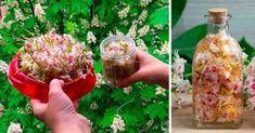 Kwiat kasztanowca - cenny lek: leczy białaczkę, guzy mózgu, żylaki i zakrzepowe zapalenie żył - Smak Dnia Celery, Sprouts, Vodka, Cabbage, Herbs, Vegetables, Ethnic Recipes, Food, Alcohol