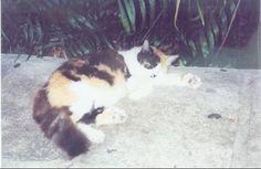 Ernest Hemmingway's Cat, Rita Hayworth
