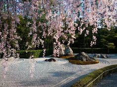 To watch the sacura stripping down its bloom in a zen garden in Kyoto - one of the dreamy travel locations