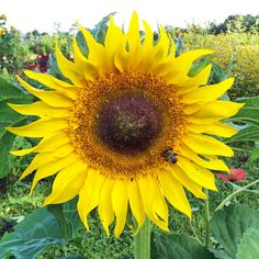 August Flowers, Hello Sunshine, The Dreamers, Instagram Posts, Plants, Summer, Wedding, Casamento, Summer Time