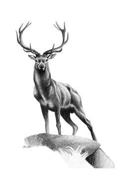All Muscle - Red Deer Stag Art Print by Patricia Howitt - X-Small Stag Tattoo Design, Deer Tattoo, Fox Tattoos, Tree Tattoos, Deer Design, Raven Tattoo, Tattoo Ink, Arm Tattoo, Hand Tattoos