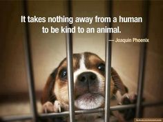 It takes nothing away for a human to be kind to an animal. (WE NEED TO PUT OUR VOICE BEHIND CHANGING LAWS TO REFLECT THE PUNISHMENT OF THOSE WHO COMMIT NEGLECTFUL, HORRIFIC, TORTUROUS, ABUSIVE & MURDEROUS ACTS TO HELPLESS & VOICELESS ANIMALS.)