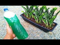 Fiji Water Bottle, 1 Real, Diy Planters, Garden Landscaping, Orchids, Succulents, Make It Yourself, Landscape, Nature