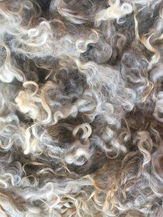 Schöne helle graue Farbe hat ein paar silberne Streifen in das Vlies. Sehr schöne Hand. Sanfte Welle, die zarten sperren. Gewaschen und bereit, Spin, Filz, färben, was auch immer Sie sich erträumen. Schlösser haben eine schöne Hand, sie sind 4-5 lang. Schöne Wellen in die Schleusen. Keine VM. In 2 Unzen Portionen angeboten. EWE #571 Diese Gotland Ewe reicht die grünen Weiden von Maine mit der Herde. Vielen Dank für die Prüfung machen Ihren Einkauf direkt von der Schäferin. Dies…