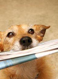 IQ-Training für Hunde